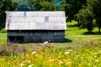 Barn and Wildflowers_5587